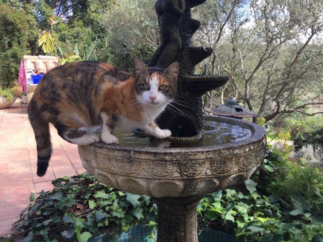 Beautiful cat at Juice Fasting Retreat
